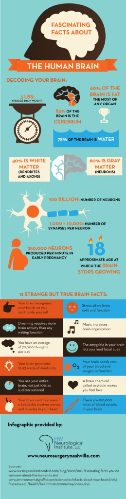 fascinating-facts-about-the-human-brain_51958182522ee_w1500