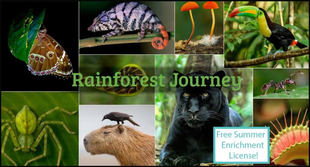 Rainforest Journey video collage 1_summer